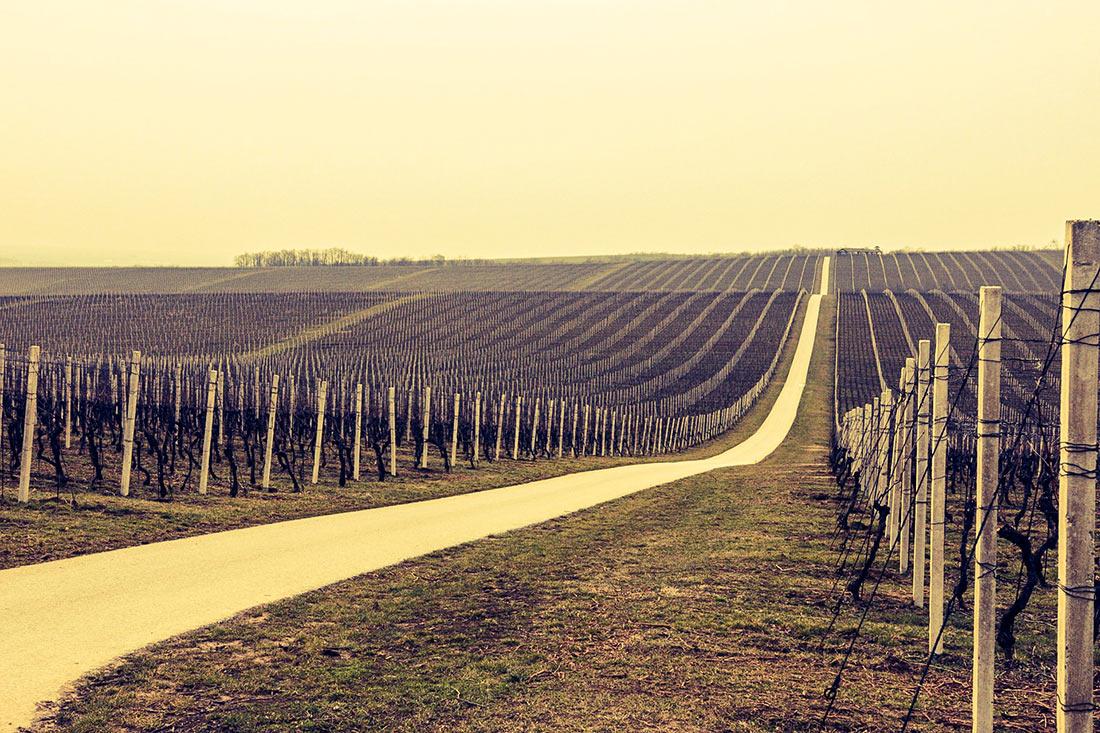 Winemaking in Croatia
