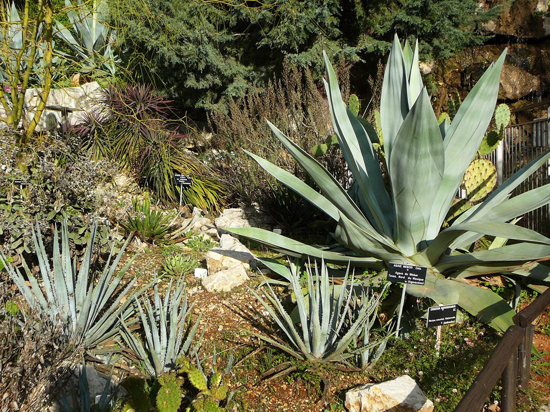 Botanical garden of Nice